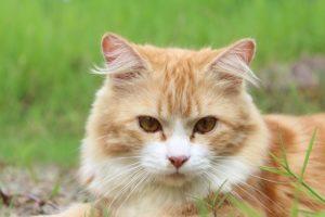 Milben bei Katzen