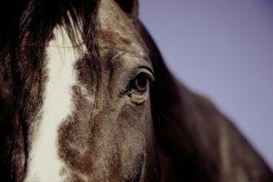 Milben Pferd